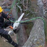 treesurgery